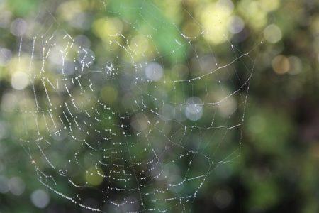 蜘蛛の巣に朝露